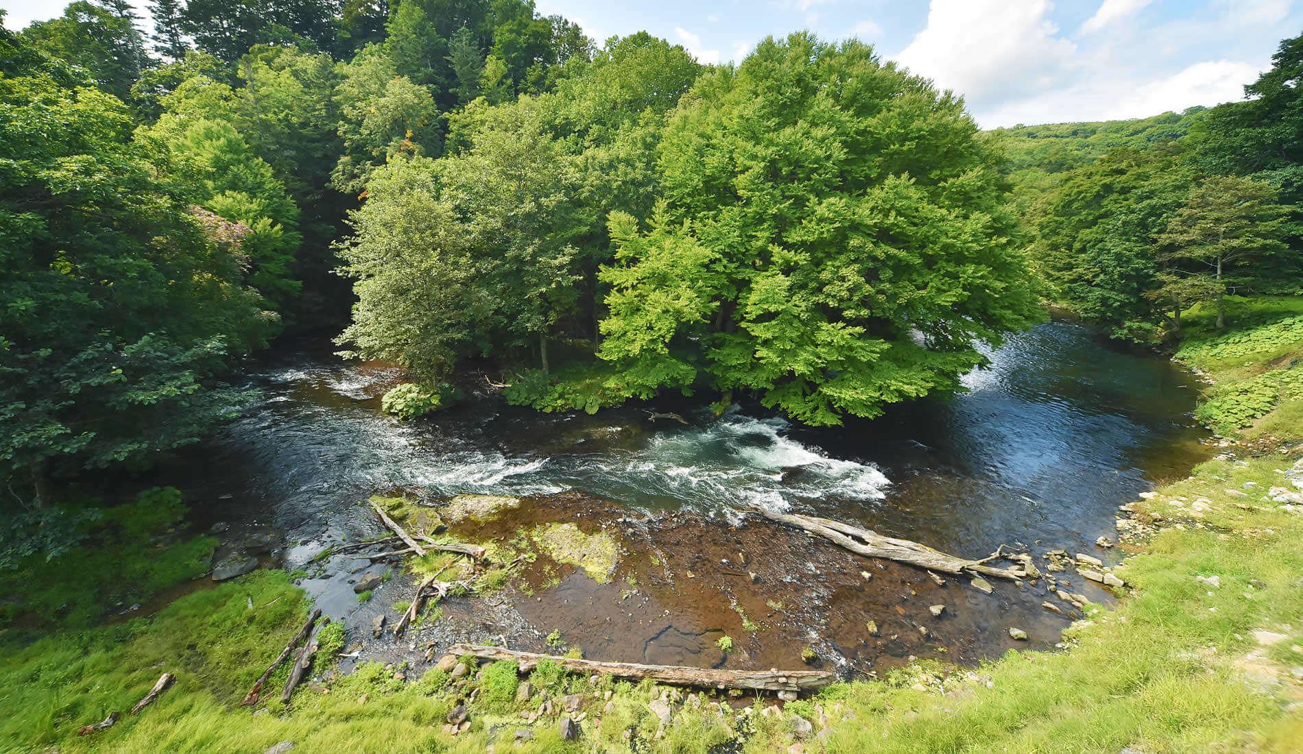 ありのままの自然にいだかれてここは、ただ川と温泉があるだけの森。